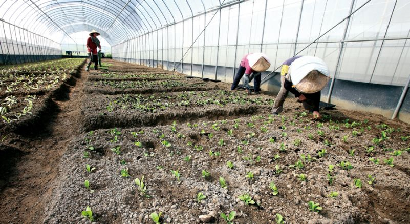 Image result for Eco-Friendly Farming Practices