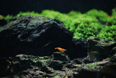 Age of Aquariums: A New Era for Ornamental Fish Farms Photos - New Southbound Policy