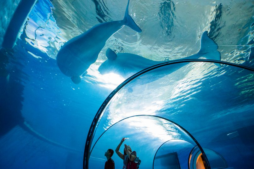 Underwater tunnel, beluga whales draw visitors to Taiwan's foremost aquarium Photos - New Southbound Policy