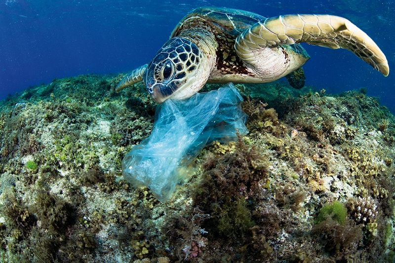 Where the Currents Take Them: Underwater Photographers Tell the Ocean's Stories Photos - New Southbound Policy