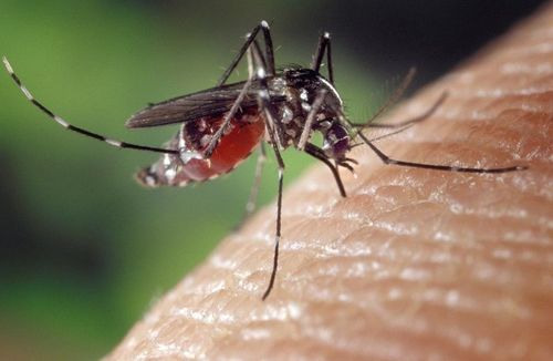 Taiwanese travelers warned to be on alert against chikungunya, dengue Photos - New Southbound Policy