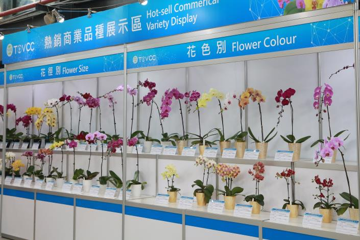 Worldwide Buyers Gather at Taiwan International Orchid EXPO Mayor Praises Strong Adaptive Capabilities of Taiwan Orchid Industry Photos - New Southbound Policy