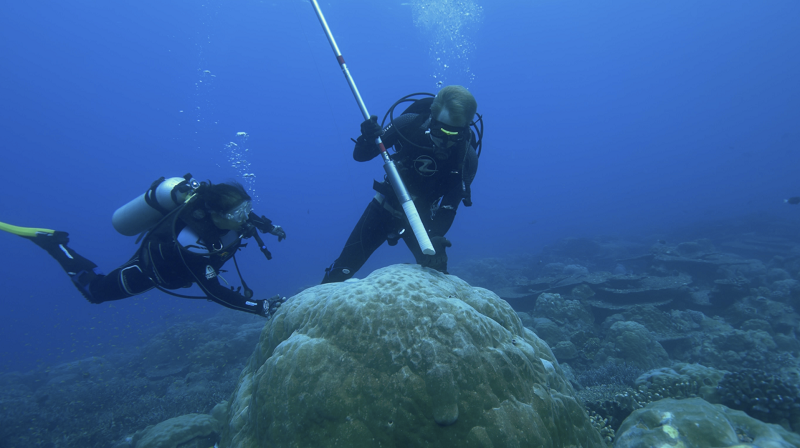 A millennial coral record of Indian Ocean climate oscillation Photos - New Southbound Policy