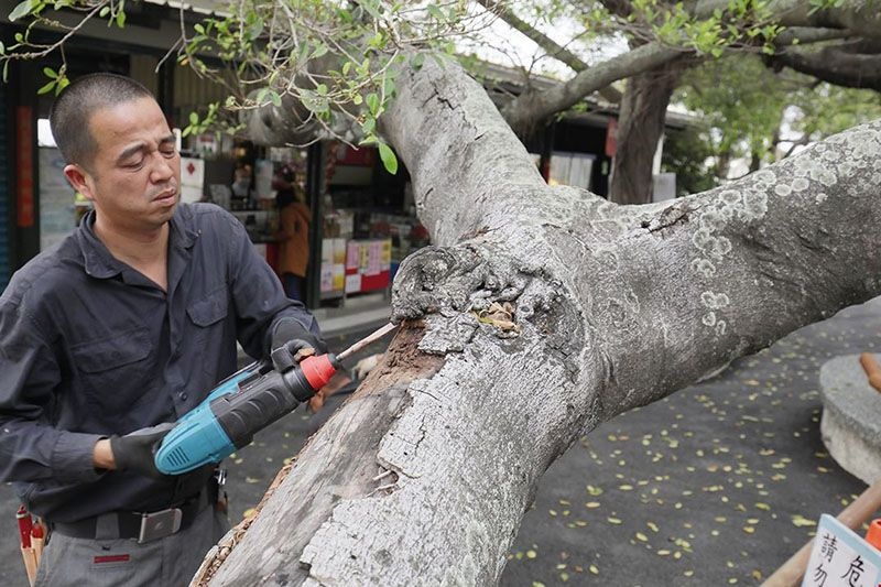 The Tree Lover: Jan Feng-chun, Taiwan's First Female Tree Surgeon Photos - New Southbound Policy