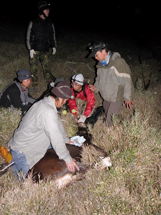 Researchers trapping a sambar.