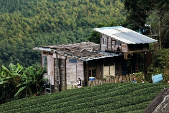 This teahouse, located in the middle of a tea plantation, attracts aficionados to come and sample the beverage.