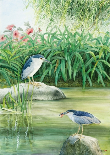 Ko used black-crowned night herons to express the concept of peaceful calm. Shown here is a watercolor entitled Tranquility.