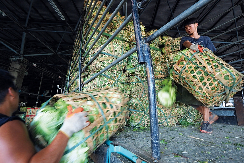 Deft and nimble porters offload cabbages as soon as the delivery trucks arrive at the market.