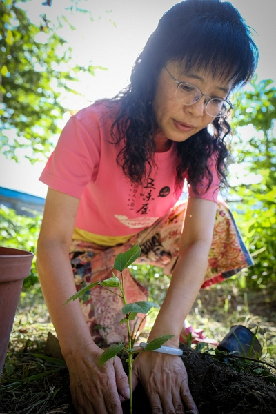 Ku Yu-chun uses natural farming methods to care for both roselle plants and children. She carefully prepares the environment to enable both to grow up to express their own individual natures.